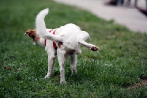 Kako naučiti psa gde da vrši nuždu?
