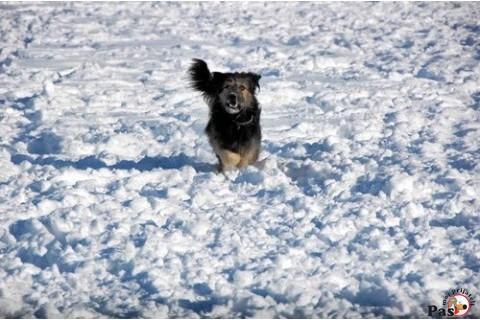 Pas u snegu