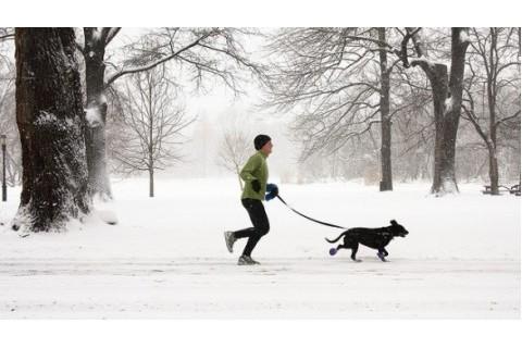 Zima i psi