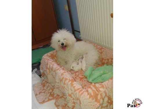 Pas moj prijatelj - Sve o psima na jednom mestu - Obuka pasa, Nabavka