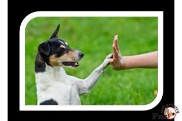 Šta treba znati pre kupovine psa