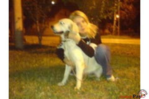 Kako sa štenetom - Štene | Pas moj prijatelj - Sve o psima