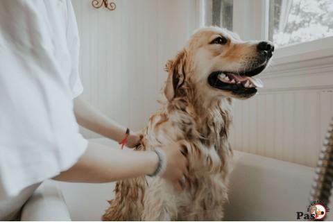 Top 8 načina da životni prostor sa kućnim ljubimcem održavamo čistim