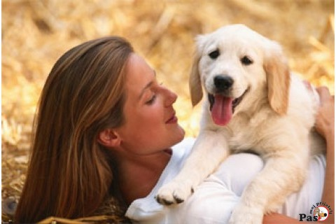 Image result for pas kao kucni ljubimac